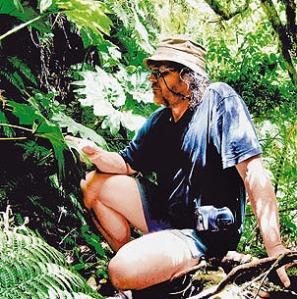 ¨ en el sotobosque de la Myrtisylva fernandeziana, en los altos de la quebrada Villagra, en la expedición de este año. Foto:ROBINSONIA/DANTON Y PERRIER
