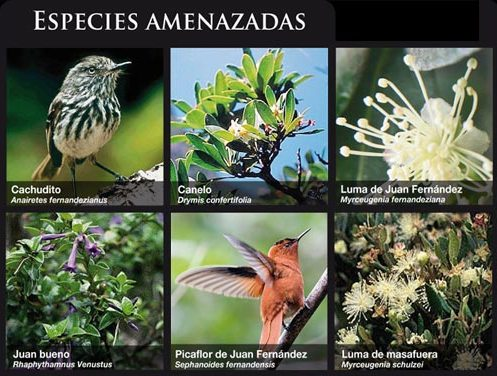 Especies Amenazadas